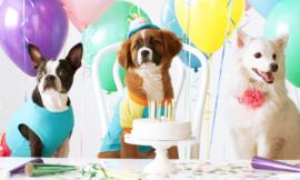 Festa de Aniversário Para Pet